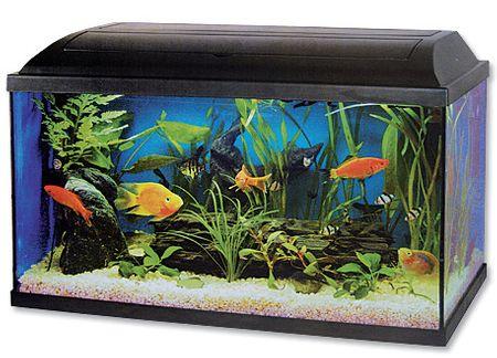Cat-Gato akwarium zestaw - 80x30x40 cm