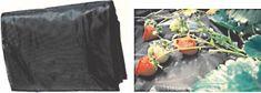 Črna PVC folija za jagode, 1,4x5m