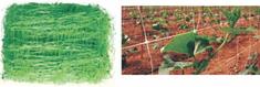 PVC mreža za potporu za biljke penjačice, 2x100m