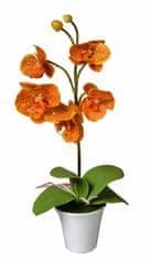 EverGreen Orchidea v kvetináči výška 35 cm, oranžová