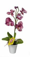 EverGreen Orchidea v kvetináči výška 35 cm, fialová