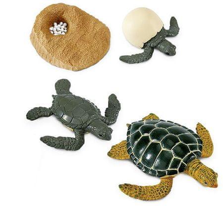 Safari Ltd. Životni ciklus - morska kornjača