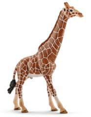 Schleich Wild Life: Žirafa, samec