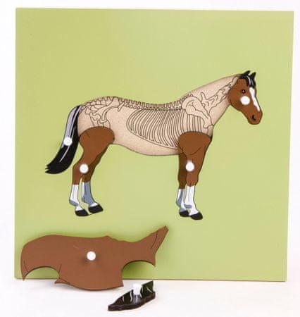 Montessori Puzzle csontvázzal - ló