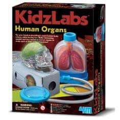 4M komplet za učenje ljudskih organa