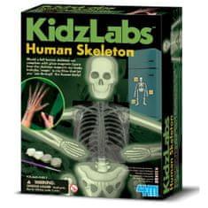 4M set Ljudski skelet