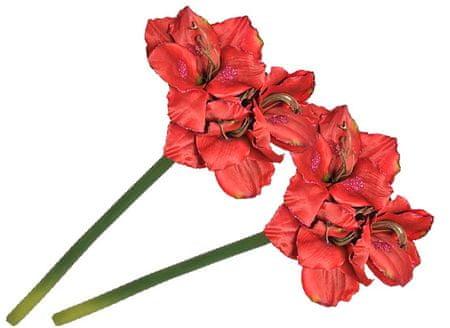 EverGreen Amarylis grandis czerwony 2 sztuki