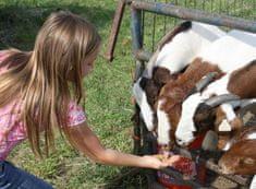 Allegria na farmu za zvířaty