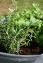 2 - HomeOgarden organsko gnojivo Organsko dognojavanje, 0,75 l