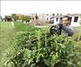 2 - Bosch AHS 55-20 LI (2x batéria) + Velké zahradnické nůžky ZDARMA