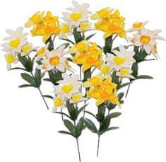 EverGreen Narcisy 10 ks