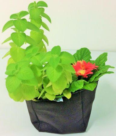 Previosa Obal na pestovanie rastlín 2 ks