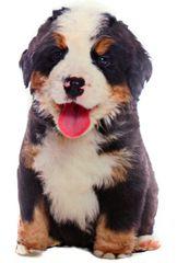 Lamps Polštářek 36 x 20 cm salašnický pes