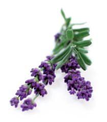 Click and Grow náplň pre smart kvetináče a farmy - Levanduľa, 3ks v balení