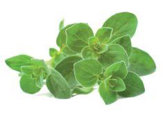 Click and Grow sadilni lonček s semeni, origano, 3 kosi