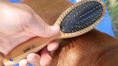 Argi Bambusowa szczotka dwustronna dla zwierząt