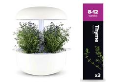 Plantui pótrekesz az okoskertbe - Kakukkfű, 3 db a csomagolásban