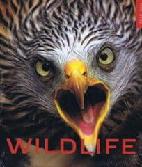 Bárta a kolektív Vladimír: Wildlife - život zveri vo voľnej prírode
