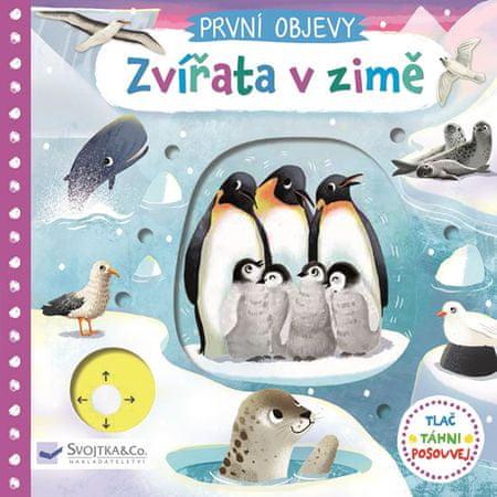 Wren Jenny: Zvířata v zimě - První objevy
