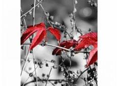 Dimex Fototapeta MS-3-0110 Červené listy v šedom 225 x 250 cm