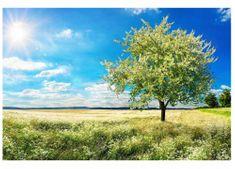 Dimex Fototapeta MS-5-0096 Kvitnúci strom 375 x 250 cm
