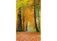 Dimex Fototapeta MS-2-0099 Jesenný les 150 x 250 cm