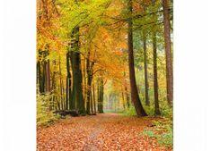 Dimex Fototapeta MS-3-0099 Jesenný les 225 x 250 cm