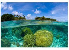 Dimex Fototapeta MS-5-0200 Koralový útes 375 x 250 cm