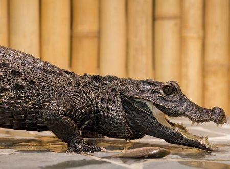 Allegria krmení krokodýlů pro dva Praha