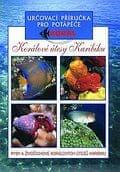 autor neuvedený: Korálové útesy v Karibiku