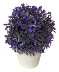 Koopman dekorativni cvet v loncu, 20 cm, purpura