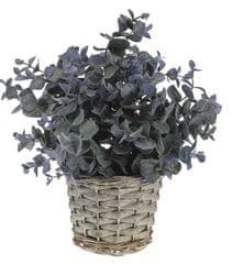 Koopman dekorativna rastlina v pleteni lončnici, dekor 2