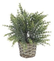 Koopman dekoracyjna roślina z plecioną donicą, dekor 3