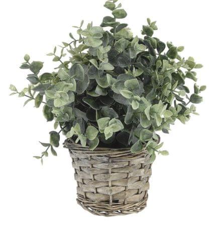 Koopman dekoracyjna roślina z plecioną donicą, dekor 4