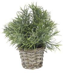 Koopman dekoracyjna roślina z plecioną donicą, dekor 5