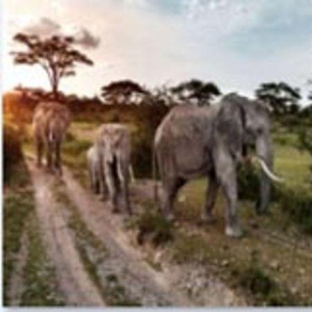 KARE Obraz na skle Elefant Family 160×120 cm