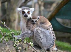 Allegria rodinné krmení zvířat v Zooparku obec Zájezd