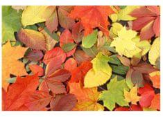 Dimex Fototapeta MS-5-0115 Jesenné listy 375 x 250 cm
