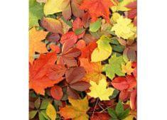 Dimex Fototapeta MS-3-0115 Jesenné listy 225 x 250 cm