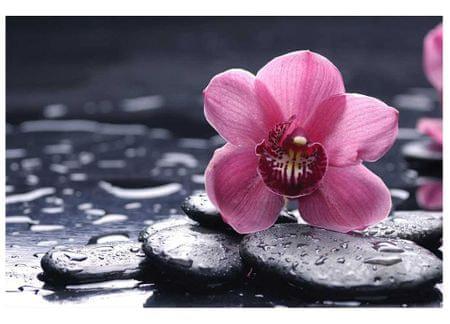 Dimex Fototapeta MS-5-0120 Orchidea 375 x 250 cm