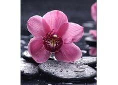 Dimex Fototapeta MS-3-0120 Orchidea 225 x 250 cm