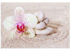 Dimex Fototapeta MS-5-0119 Orchidea v piesku 375 x 250 cm