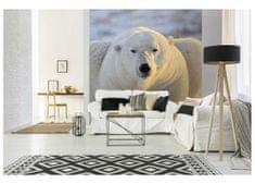 Dimex Fototapeta MS-3-0220 Ľadový medveď 225 x 250 cm
