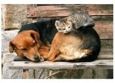 Dimex Fototapeta MS-5-0221 Pes a mačka 375 x 250 cm