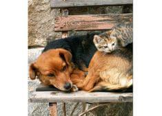 Dimex Fototapeta MS-3-0221 Pes a mačka 225 x 250 cm