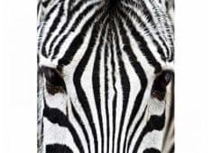 Dimex Fototapeta MS-3-0234 Zebra 225 x 250 cm