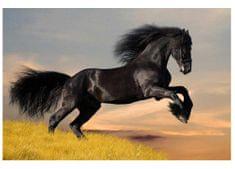 Dimex Fototapeta MS-5-0228 Čierny kôň 375 x 250 cm