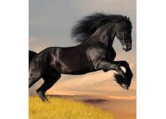 Dimex Fototapeta MS-3-0228 Čierny kôň 225 x 250 cm