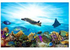 Dimex Fototapeta MS-5-0216 Morské ryby 375 x 250 cm