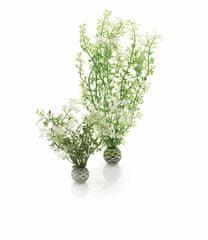 Oase Sada vodních rostlin s bílo-zelenými lístky
